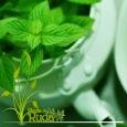 Plantas medicinales infravaloradas