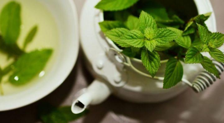 Plantas Medicinales mapuches