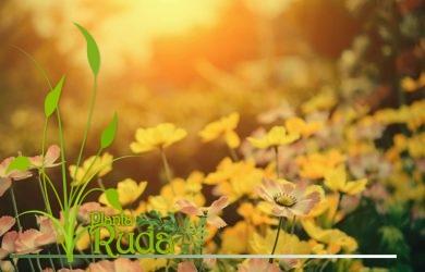 Plantas medicinales chinas