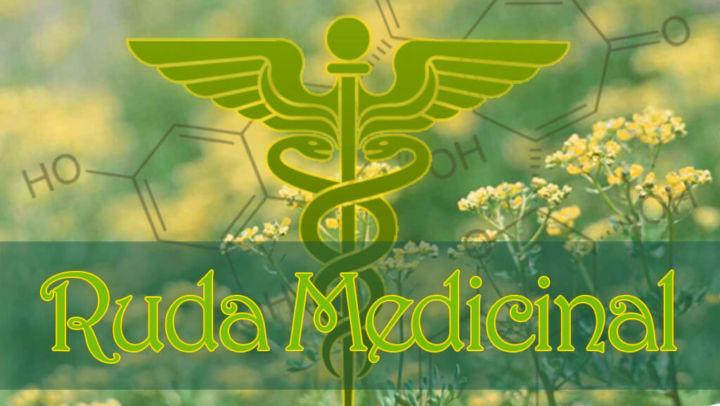 Planta ruda Medicinal